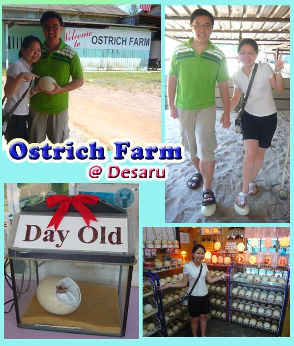 Kota Tinggi/Desaru Ostrich Farm
