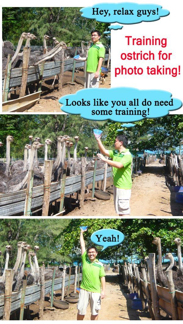 Kota Tinggi/Desaru Ostrich Farm Training