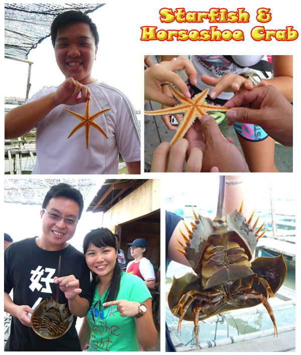 Starfish & Horseshoe Crab