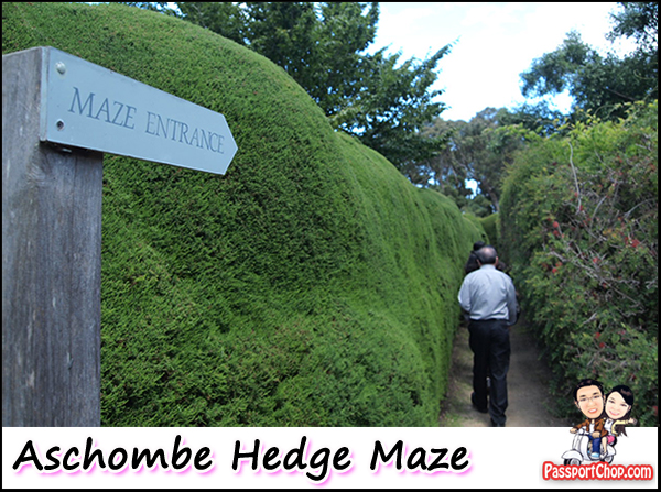 Ashcombe Hedge Maze Mornington Peninsula Melbourne Australia