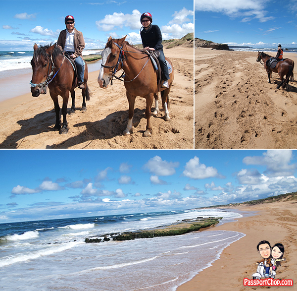 Mornington Peninsula Experience Bush and Beach Horseback Riding Bunyip Tours Horse riding along Gunnamatta beach