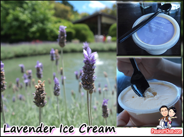 Ashcombe Hedge Maze Lavender Labyrinth Ice-Cream Mornington Peninsula Melbourne Australia