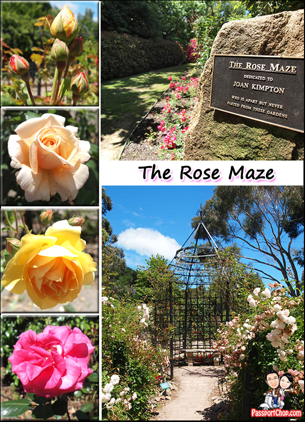 Ashcombe Hedge Maze Circular Rose Maze Mornington Peninsula Melbourne Australia