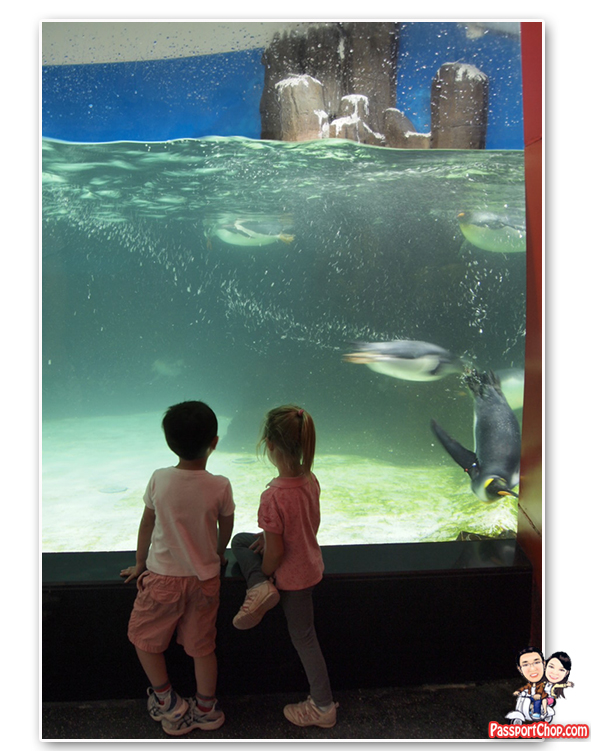 Melbourne Aquarium - Amazing Worlds to Discover