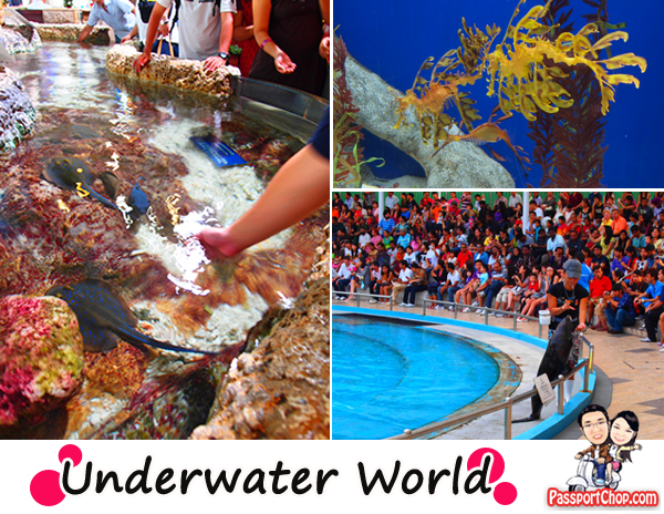 Underwater World Singapore & Dolphin Lagoon oceanarium showcasing some 2500 marine life from 250 species