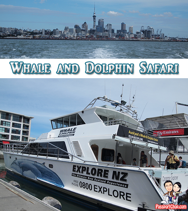 Whale Dolphin Safari New Zealand Auckland Explore NZ Tour