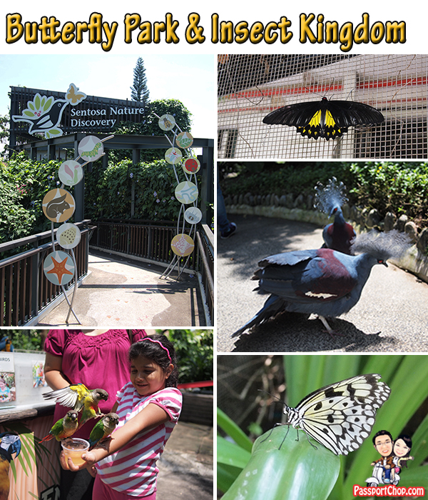 Butterfly Park and Insect Kingdom Sentosa Island