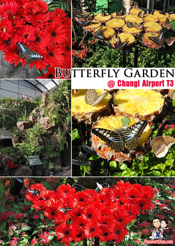 Butterfly Garden Changi Airport Terminal 3