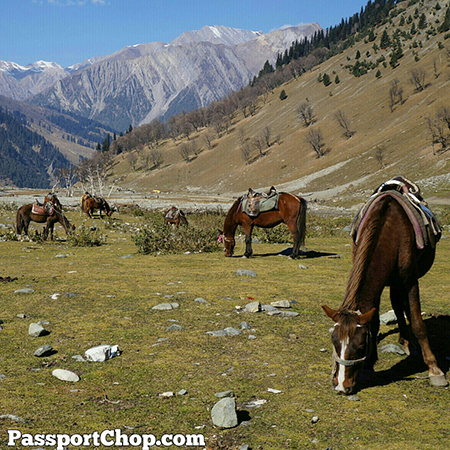 Sonmarg Meadow of Gold Srinagar Thajwas Glaciers Pony Ride