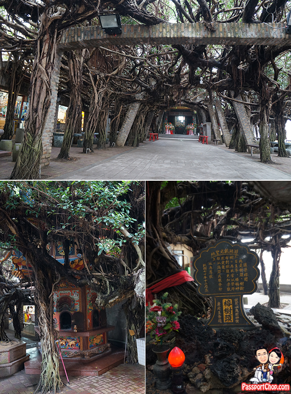 Tongliang Great Banyan Tree 通樑古榕 Penghu 澎湖環島 Temple