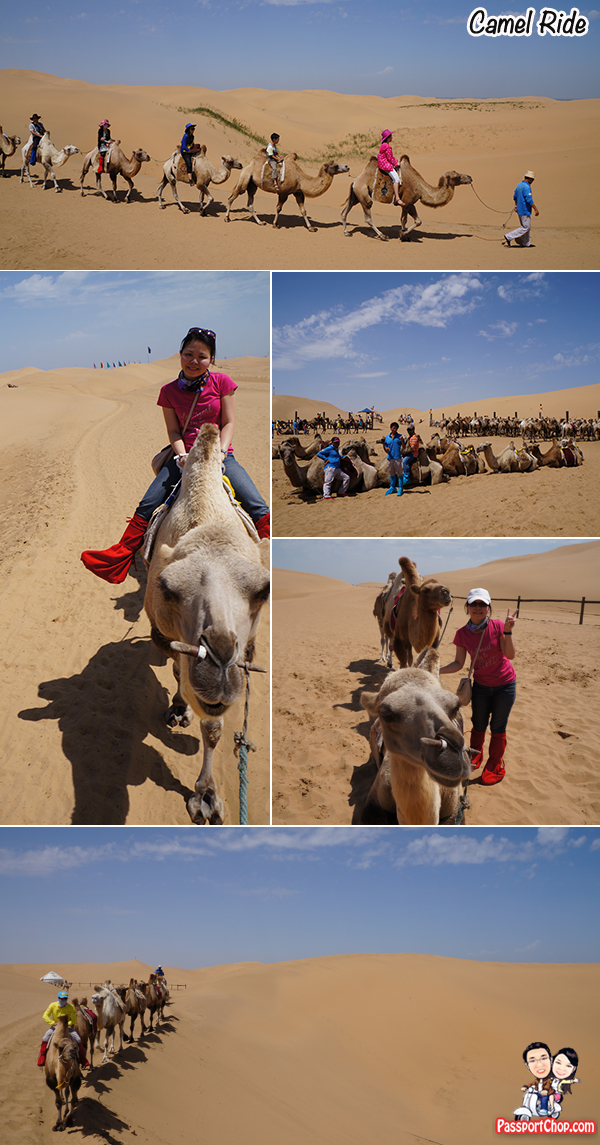 Baotou Xiangshawan Camel Ride Resonant Sand Bay Gorge Singing Sand Ravine