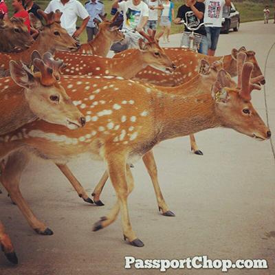 Saihantala Grassland Deer Garden