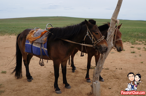 Xilamuren Grassland 希拉穆仁草原 蒙古人圣地度假村 Inner Mongolia Grassland Meng Gu Ren Sheng Di Mongolian Sacred Land Resort Shangri-La Huhhot Grassland Experience Mongolian Horse Riding across Mongolian Steppes