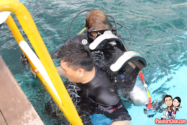 dolphin-trek-rws-wetsuit
