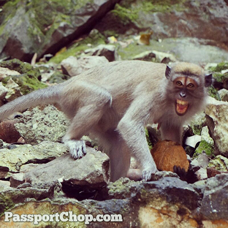 Aggressive-Monkey-Batu-Caves