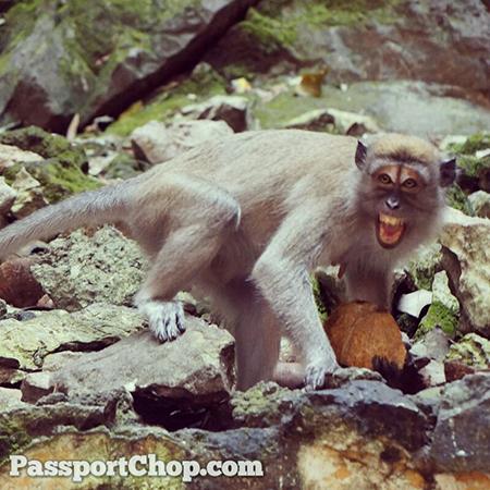 Aggressive-Monkey-Batu-Caves