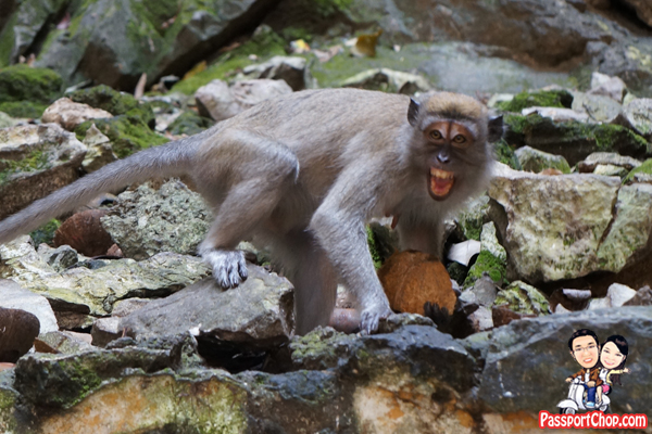 batu-caves-aggressive-monkeys