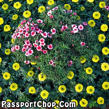 Flower Display Australian Garden Show Sydney AGSS