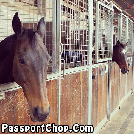 Centennial Parklands Equestrian Centre Horse-Riding in the Park