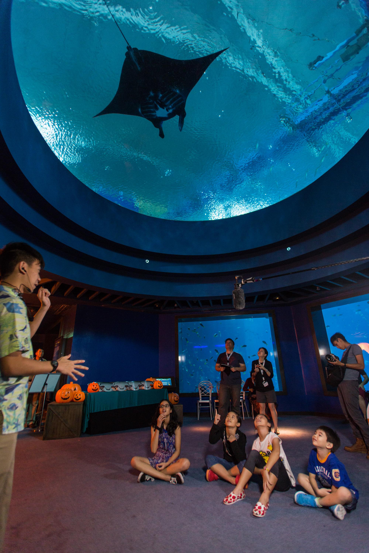 aquarist-explaining-manta-ray-m1-sea-aquarium