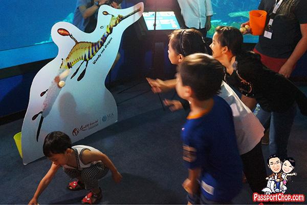 aquarist-sea-aquarium-ocean-dreamer