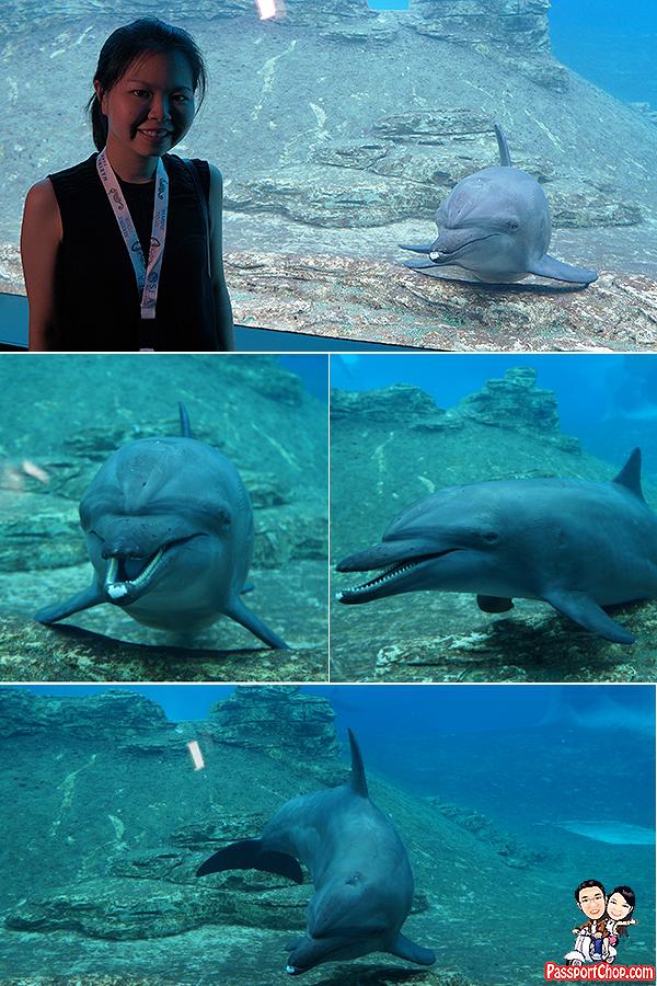 dolphin-selfie-shot-sea-aquarium