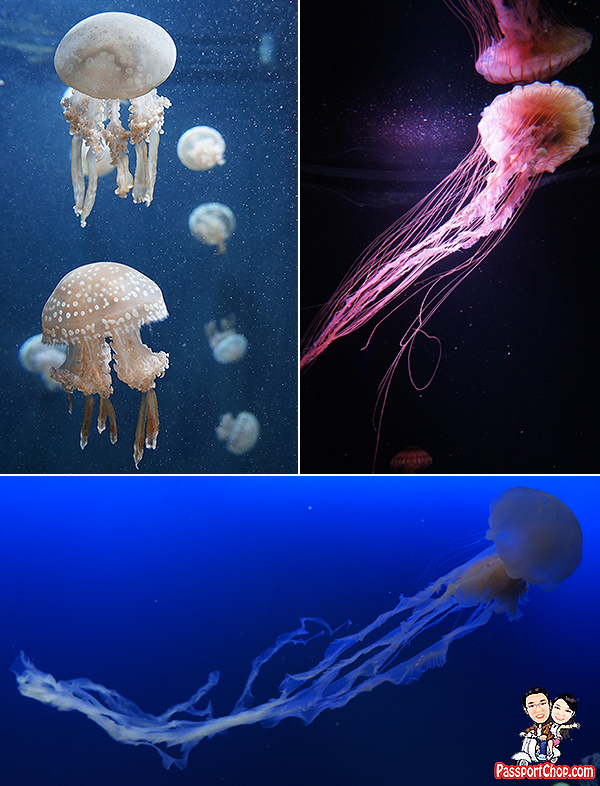 jellyfish-sea-aquarium