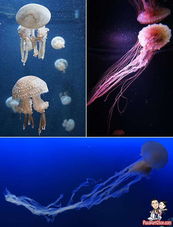 jellyfish-sea-aquarium
