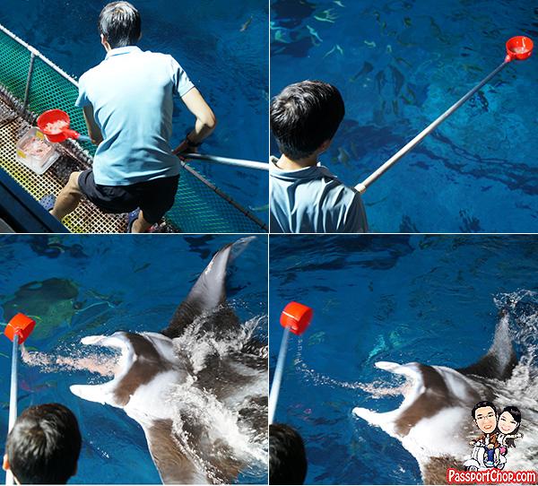manta-ray-feeding-step-by-step