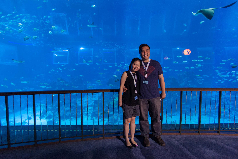 sea-aquarium-large-ocean-tank-viewing-gallery
