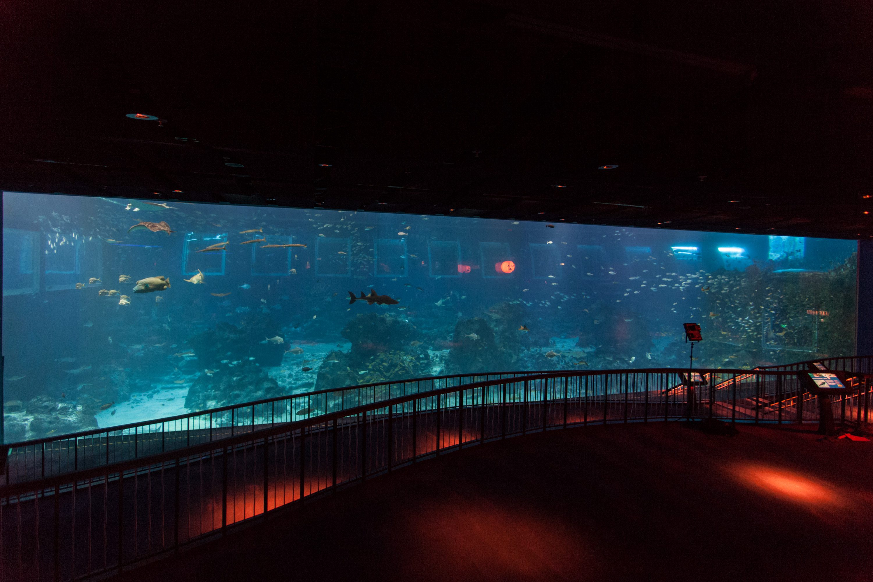 sea-aquarium-open-ocean-tank-largest-viewing-panel
