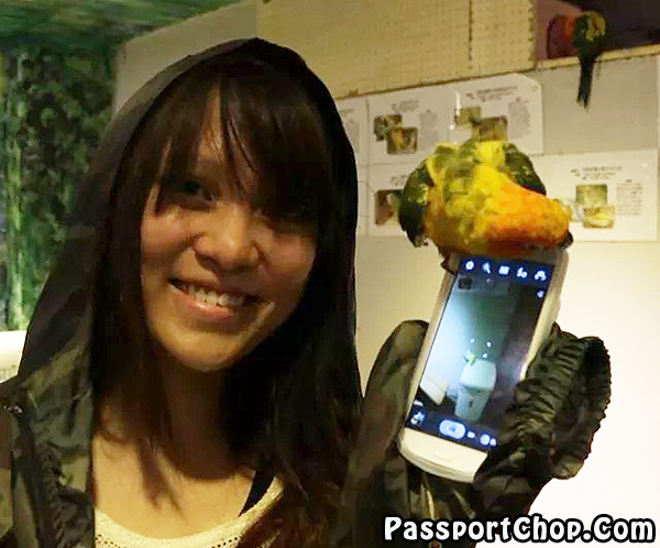 Tori-no-iru-Kafe-Asakusa-curious-parrot