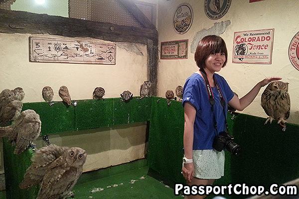 Tori-no-iru-Kafe-Asakusa-owl-tokyo