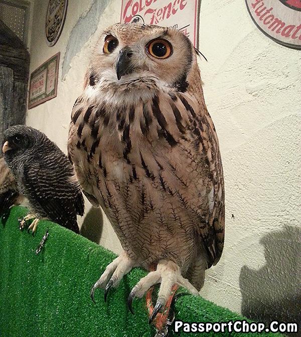 Tori-no-iru-Kafe-Asakusa-owl
