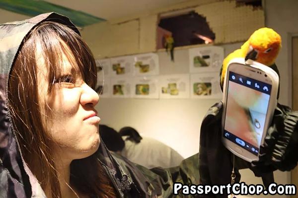 Tori-no-iru-Kafe-Asakusa-stubborn-parrot