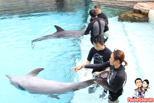 dolphin-trek-discovery-rws