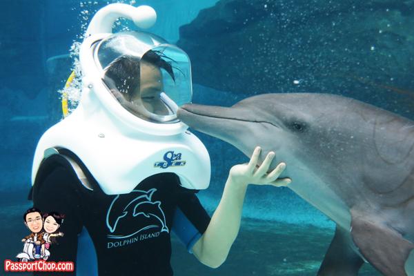 dolphin-trek-dolphin-island-experience
