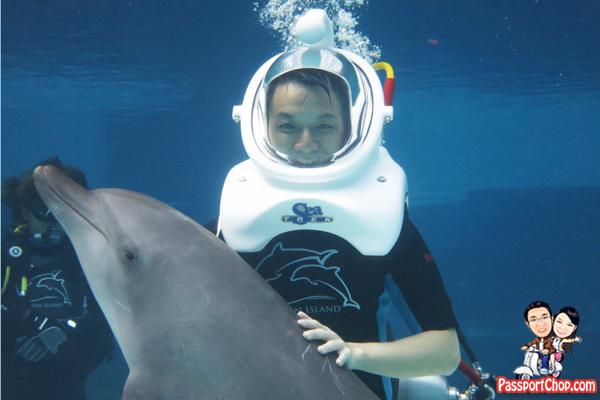 hugging-dolphin-trek-rws
