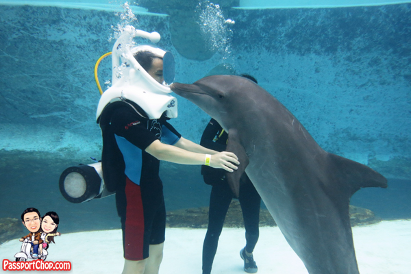 kissing-dolphin-rws-adventure-cove