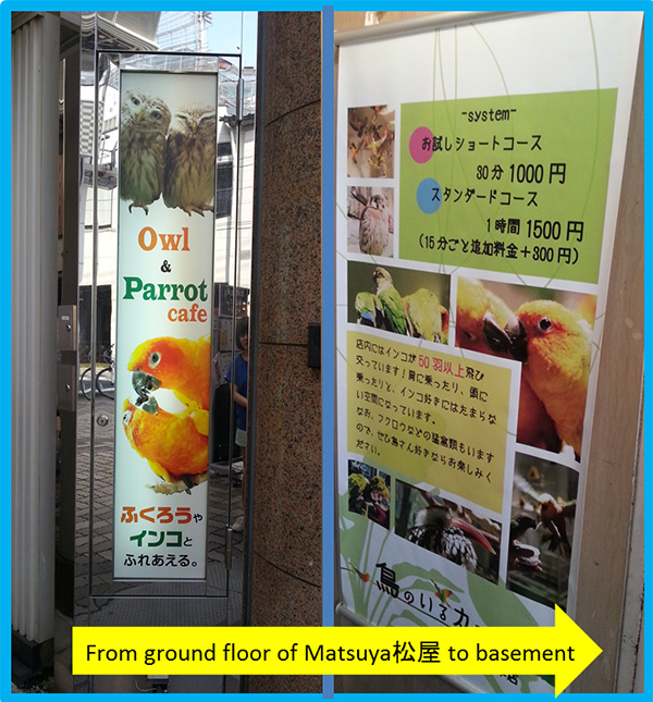 owl-parrot-cafe-asakusa-tokyo