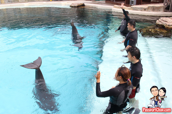 wave-goodbye-dolphin-trek-rws
