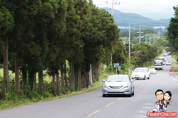 mysterious road jeju drive car gravity slope