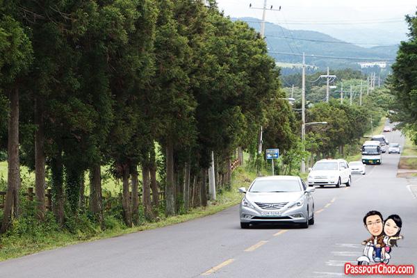 mysterious road jeju drive car gravity slope