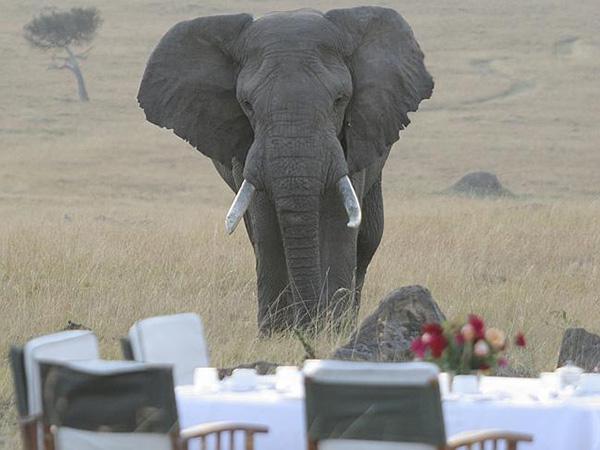 sanctuary-glamping-breakfast-safari