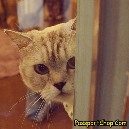 myeongdong-cat-cafe-seoul
