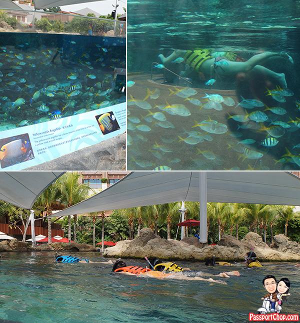 rainbow-reef-marine-life-park-adventure-cove-rws-snorkelling