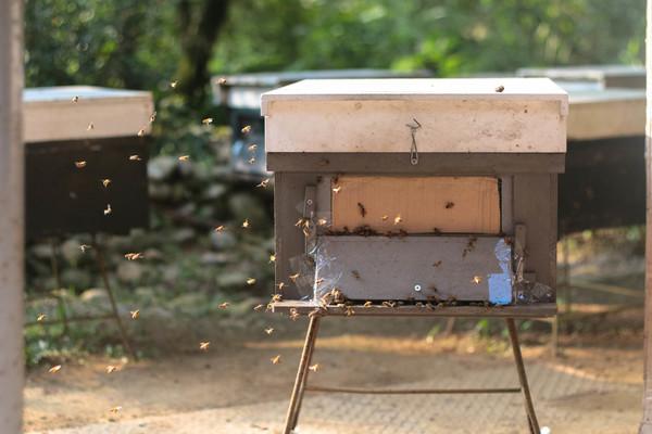 dongshih forest garden bee farm
