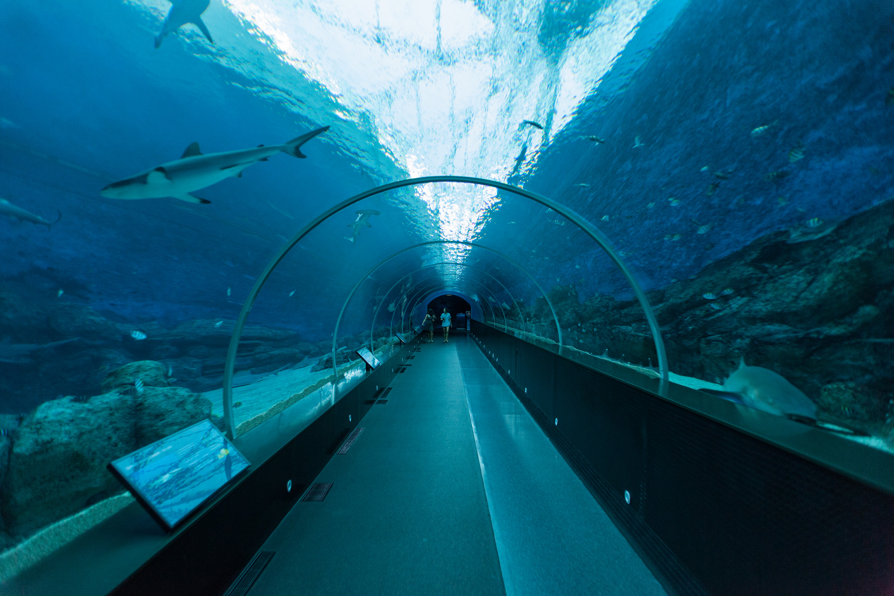 sea-aquarium-largest-singapore-rws