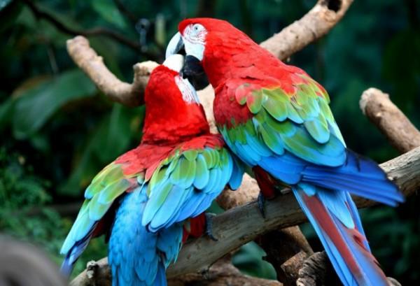 penang-bird-park-640x436