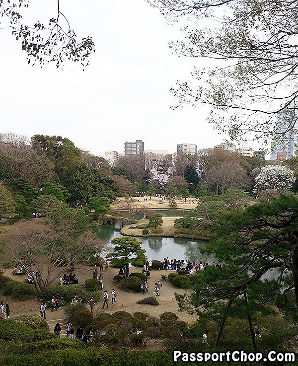 rikugien tokyo shidare sakura viewing